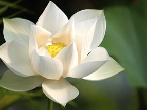 meditacio-kezdjuk-az-elejen