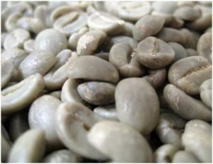 zöld kávéu3
