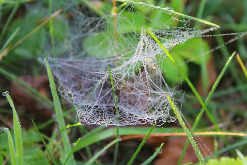 Házi módszerrel a pókháló ellen